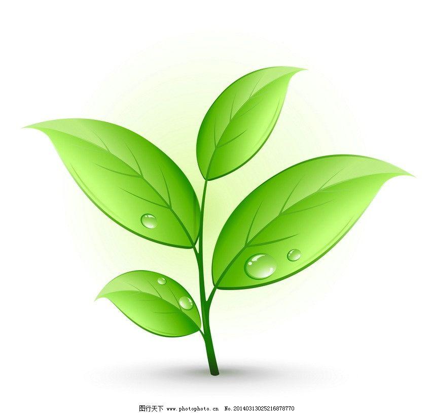 树叶水滴-绿叶