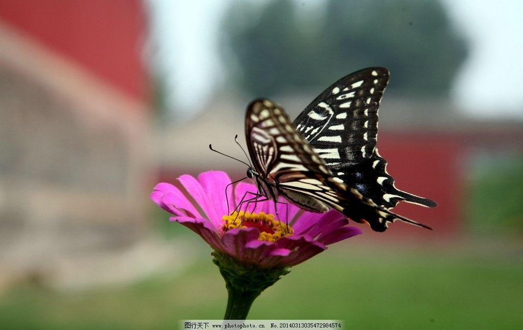 蝴蝶 花儿 春天 生机 无限 昆虫世界 昆虫 生物世界 摄影 72dpi jpg