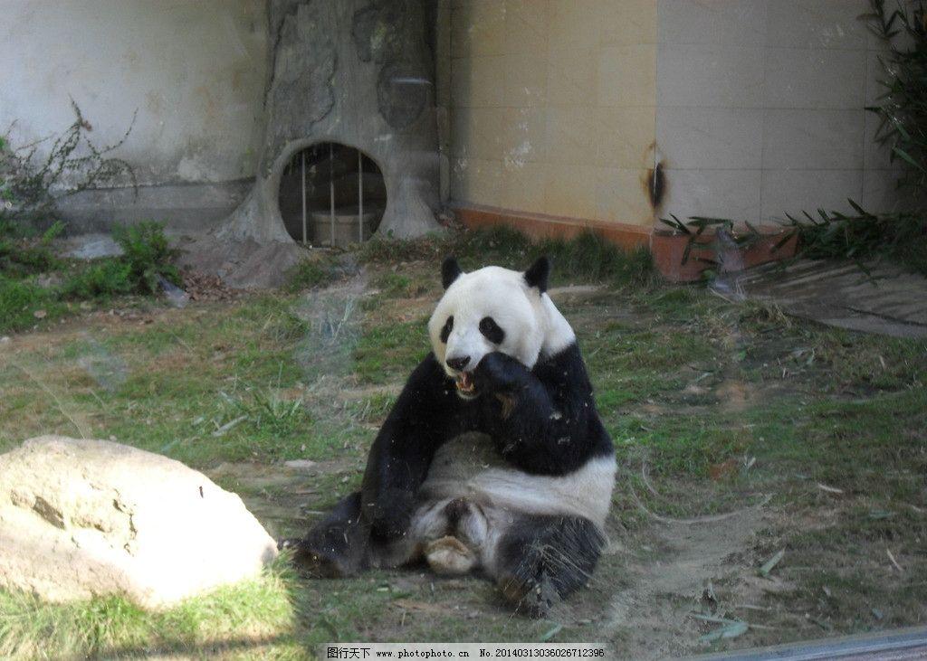 熊猫 动物园 熊猫馆 大熊猫 猫熊 其他生物 生物世界 摄影 96dpi jpg