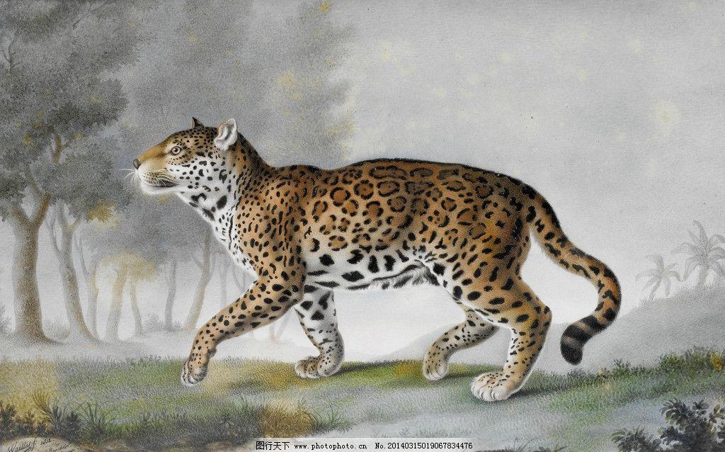 油画动物 西方 油画 风景 历史 动物 豹子 绘画书法 文化艺术 设计 72