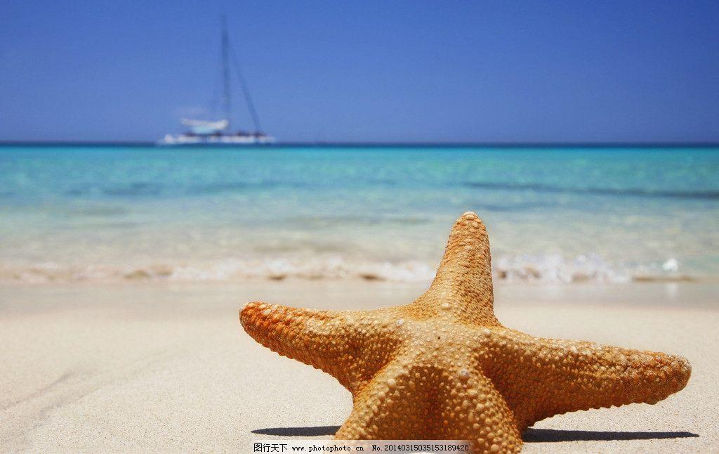 海星 大海 海边 海滩 沙滩 星形 五角星 生物 海洋 摄影