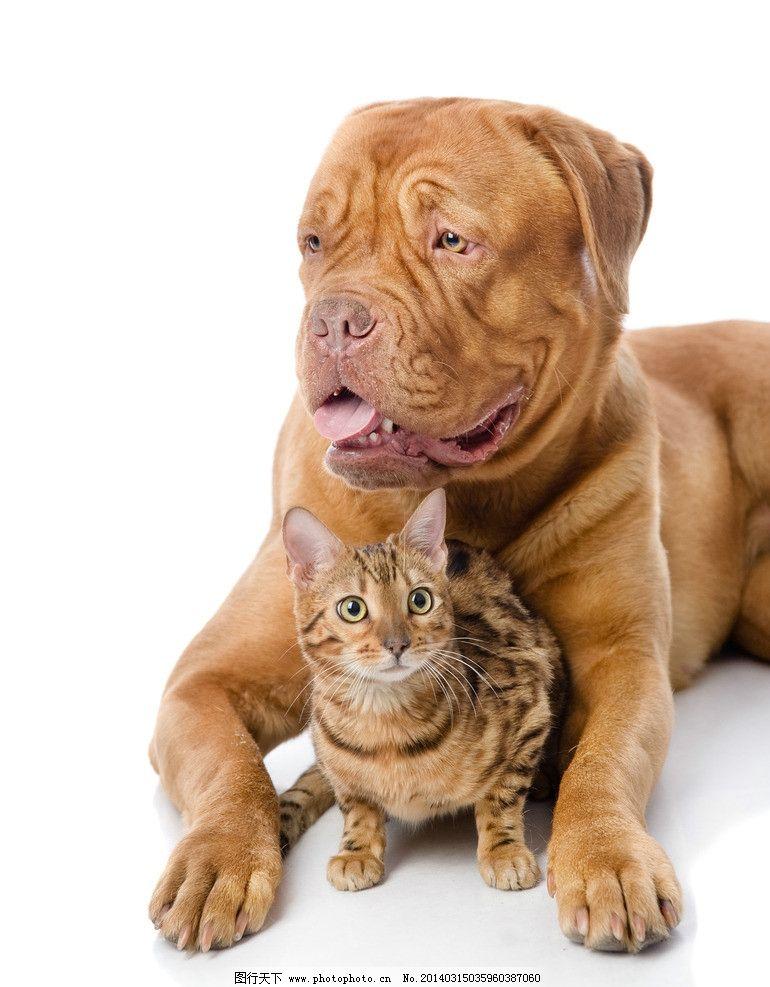 丑狗与俊猫 狗 猫 动物 有爱 狗与猫 家禽家畜 生物世界 摄影 300dpi