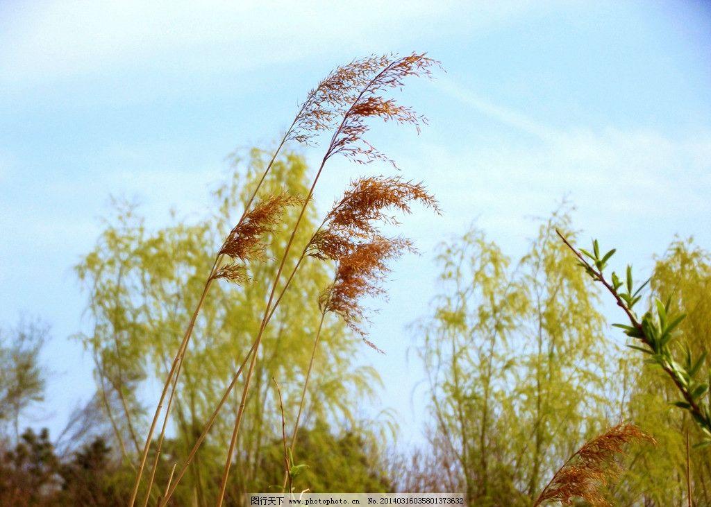 春天的色彩图片_树木树叶