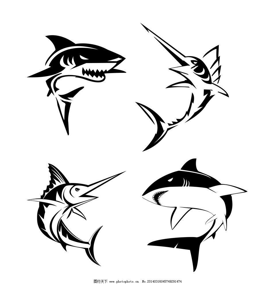 鲨鱼 野生 动物 海洋生物