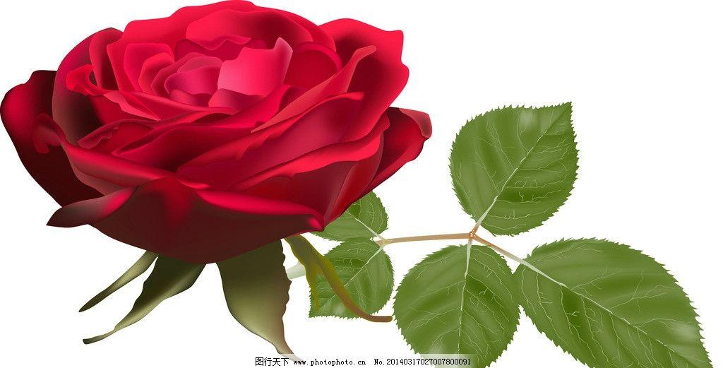 绿叶 鲜花 春天鲜花 手绘鲜花 手绘玫瑰花 花朵 花卉 花瓣 婚礼 婚庆
