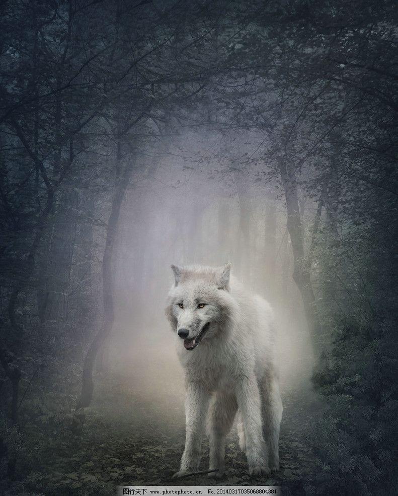 狼 森林狼 动物 保护动物 小动物 野狼 摄影