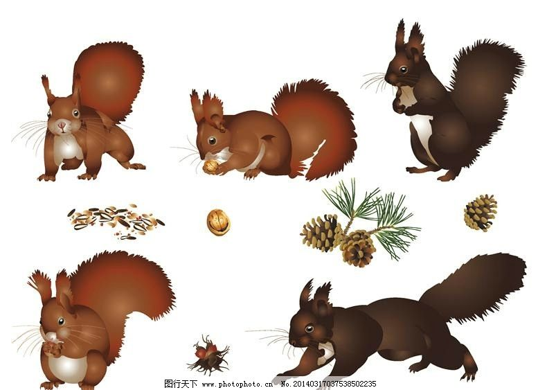 松鼠小动物设计图片_电脑网络