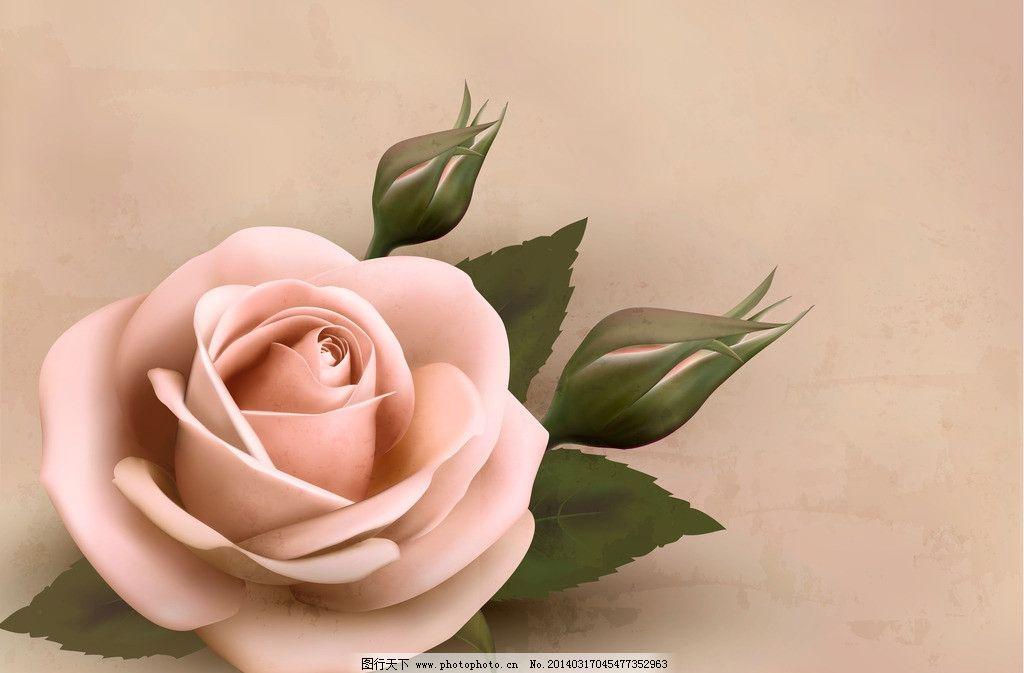 手绘鲜花 手绘玫瑰花 花朵 花卉 花瓣 婚礼 婚庆 情人节 盛开 手绘