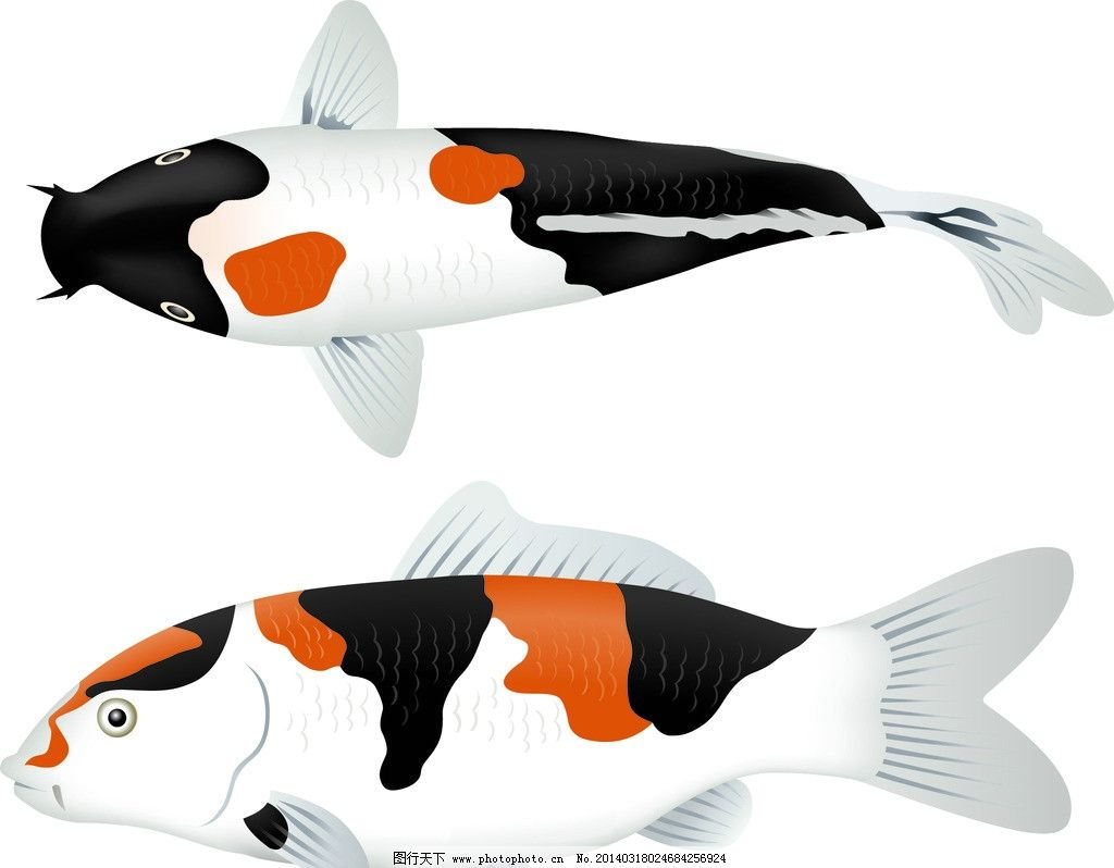 鱼类 鱼 鲤鱼 动物 食物 餐桌 生物世界 矢量 ai