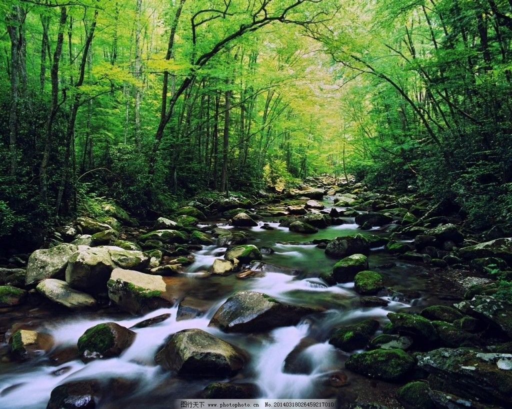流水 森林 小溪 桌面 小溪 流水 桌面 森林 图片素材 风景 生活 旅游