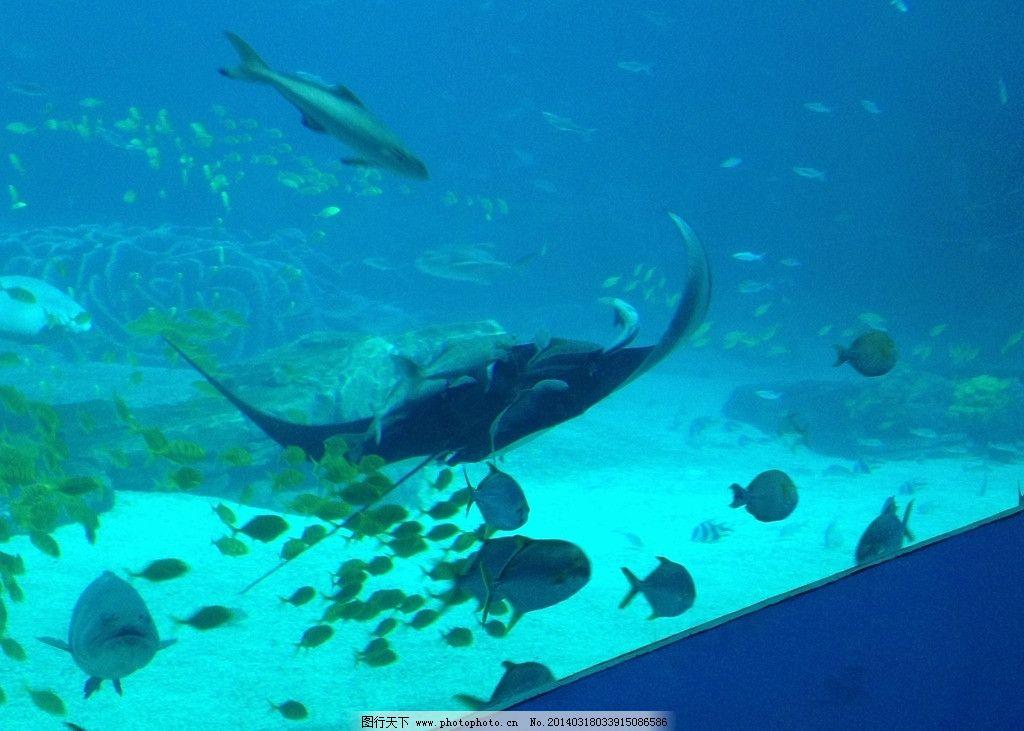 海底世界 摄影 动物 鱼
