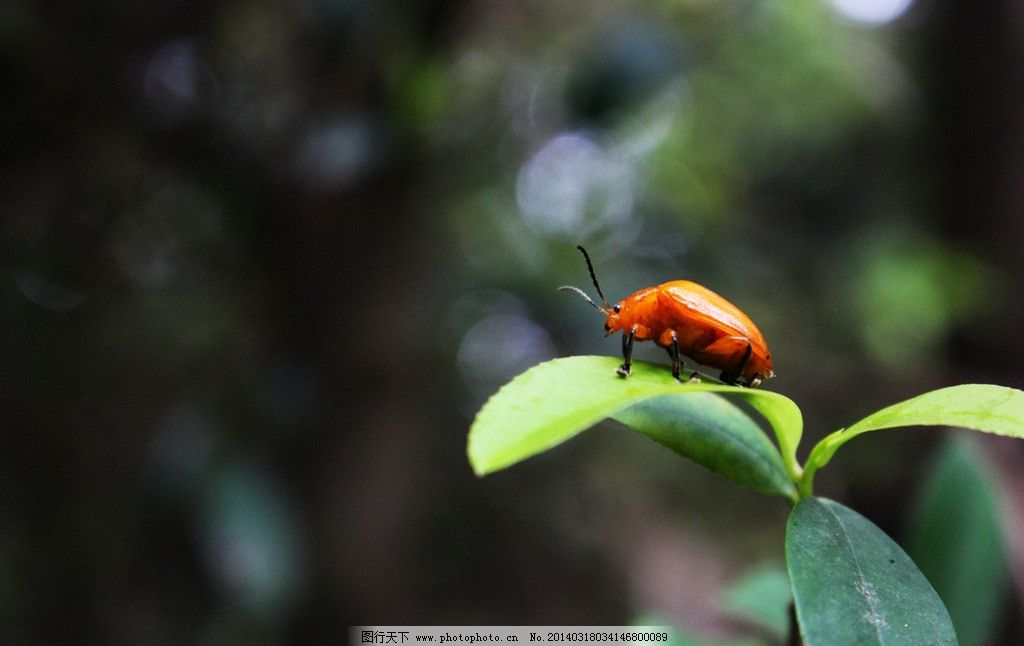叶子上的昆虫图片