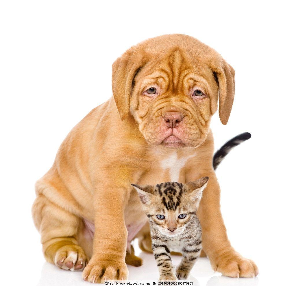 宠物狗 狗 小狗狗 犬 家禽 可爱 小狗 宠物 猫咪 小动物 家禽家畜