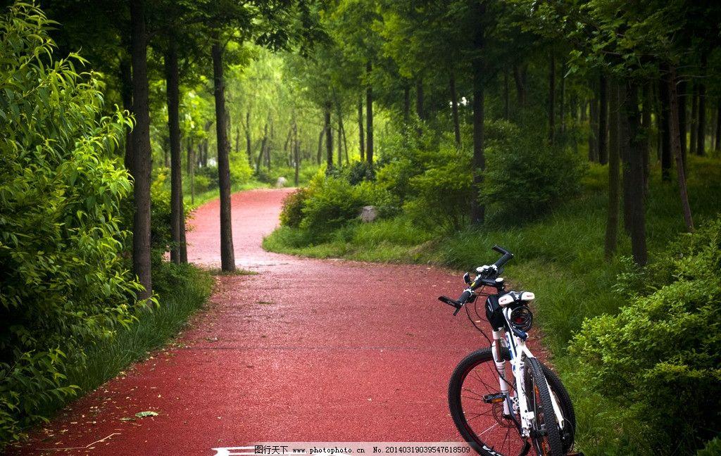 自行车 公园 自行车道 健身 旅游 运动 休闲 道路 树林 沿河 日照