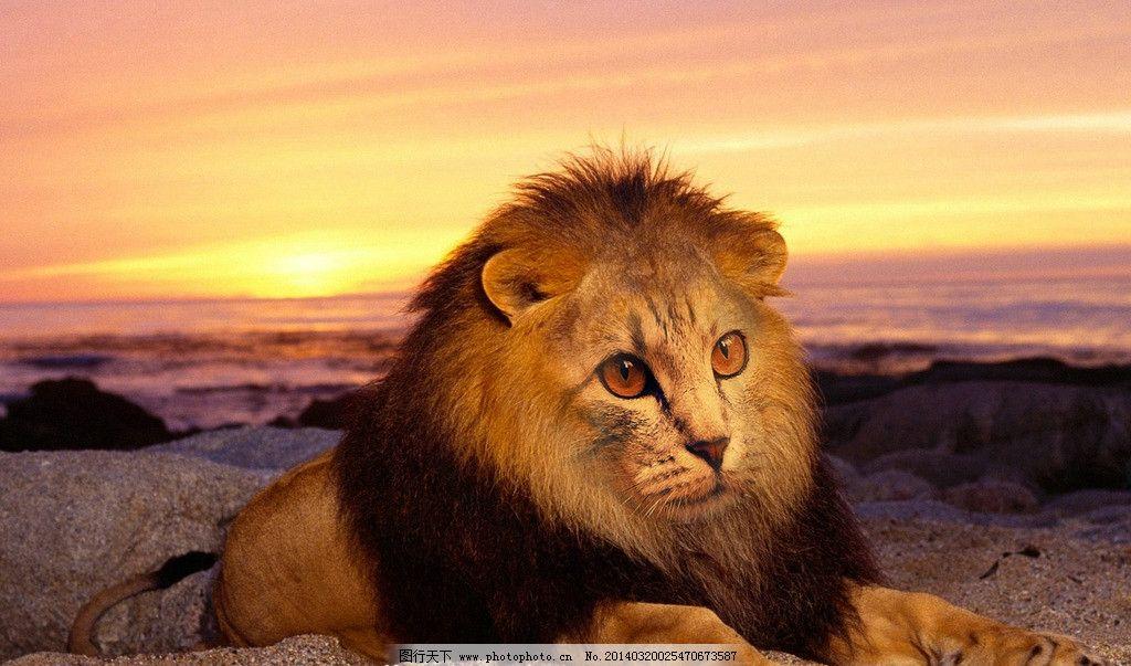 猫面狮子图片