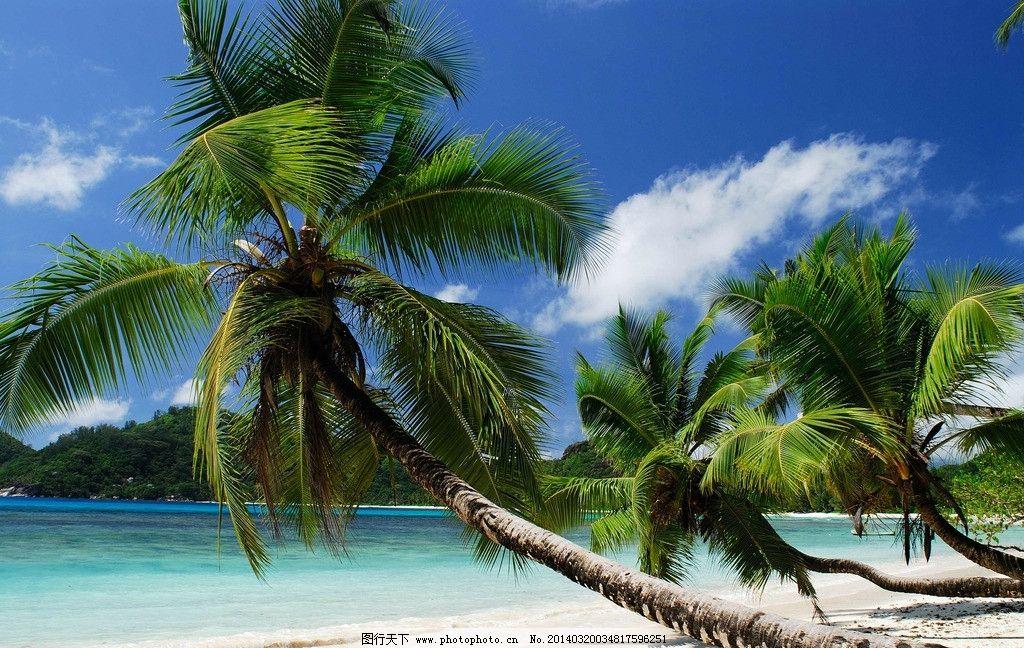 椰子树 阳光 大海 蓝天 白云 美景 沙滩 海景 海洋 海滩 海边