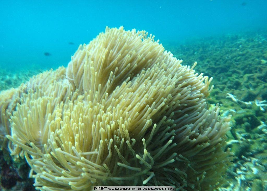 珊瑚 马来西亚 热浪岛 浪中岛 水母 海洋生物 生物世界 摄影 350dpi