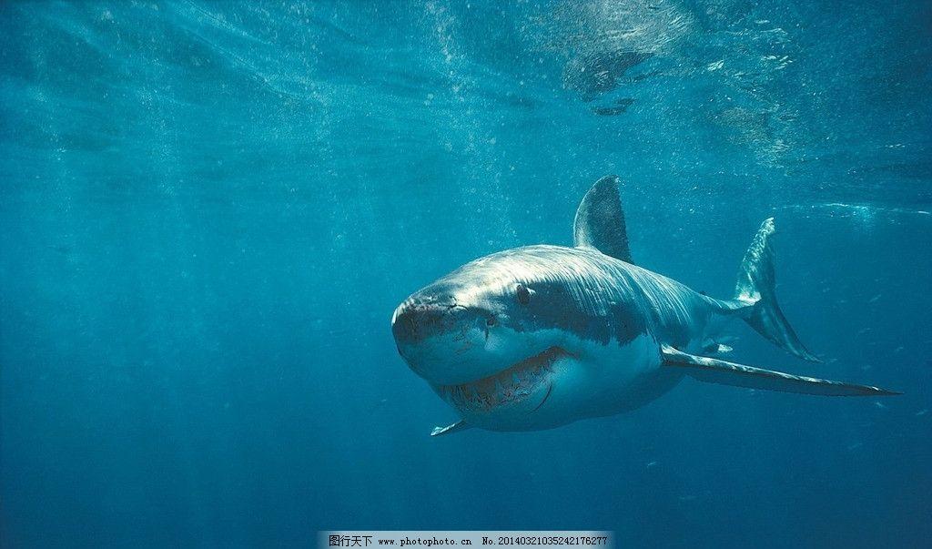 最早海洋动物图片