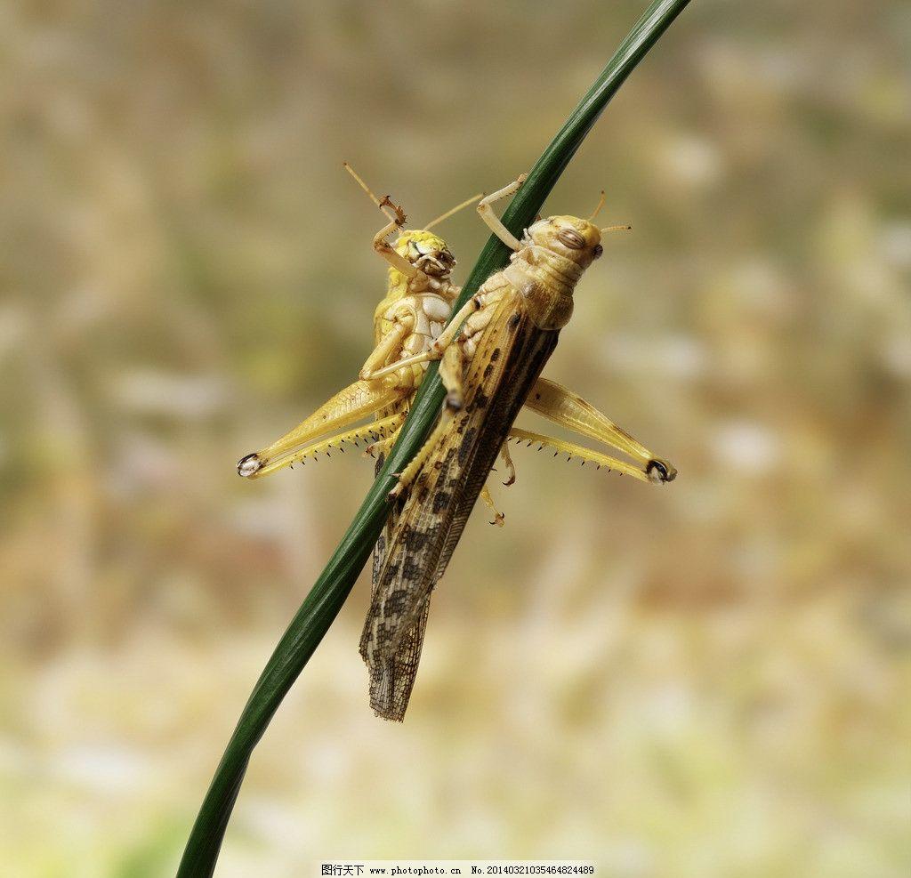 蝗虫纸飞机折法