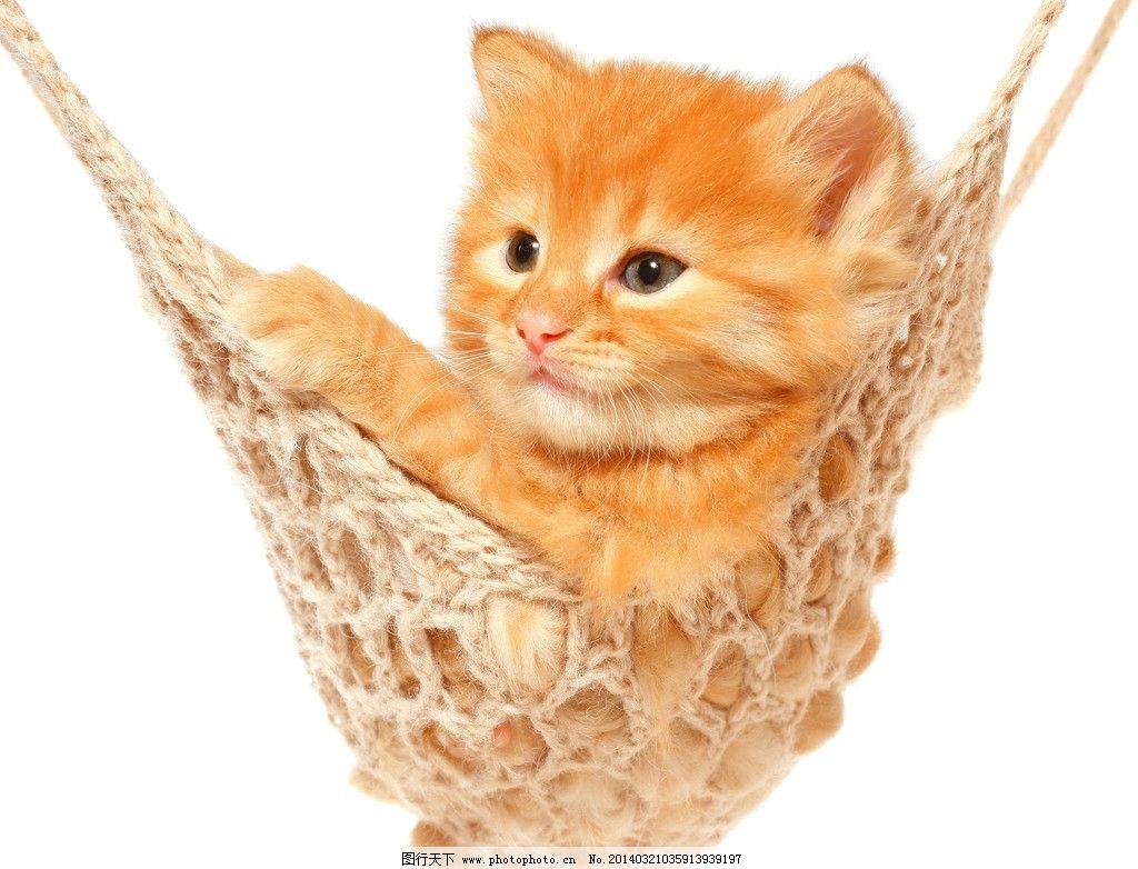猫咪 小猫 宠物 摇篮 可爱 摄影