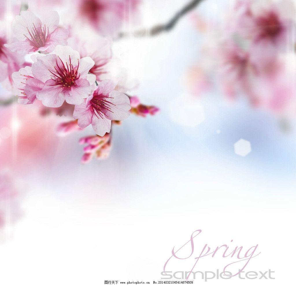 桃花 鲜花 樱花 春天鲜花 春天背景 花草 生物世界