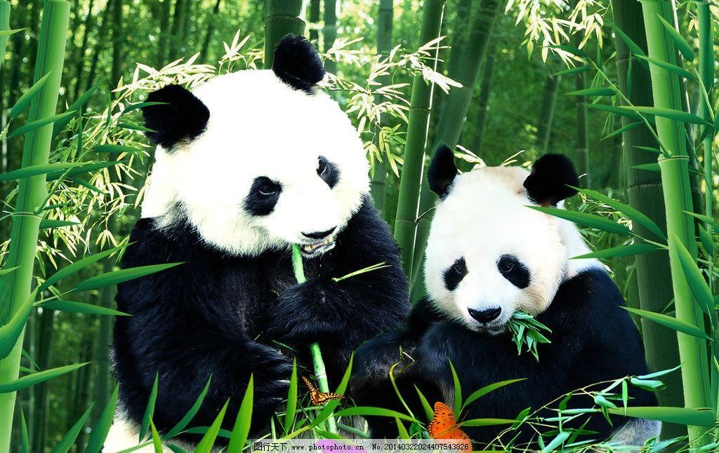 熊猫宝宝 动物 熊猫 宝宝 竹林 绿竹 野生动物 生物世界 设计 28dpi