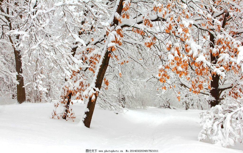 雪中红叶图片