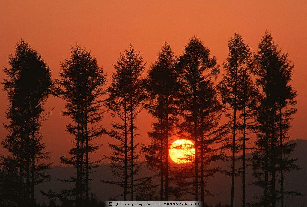 夕阳 树林 黄昏 森林 朝阳 傍晚 日出 日落 晚霞 黎明 早上 早晨 清晨