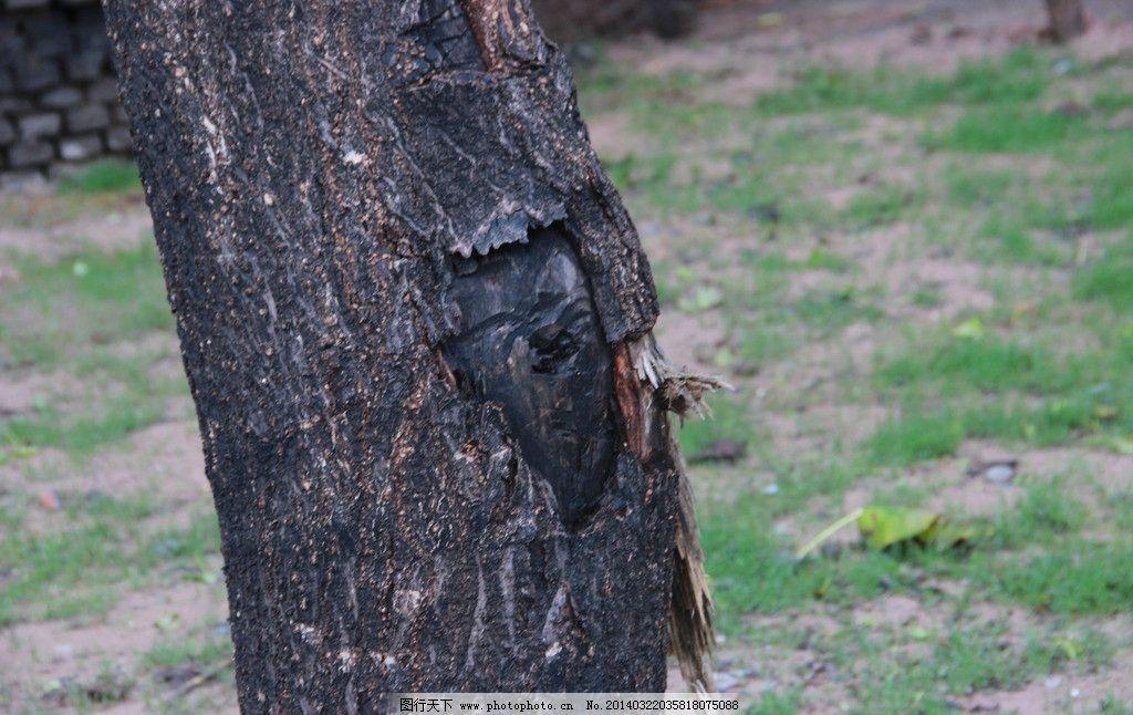 岁月 大树 纹理 树皮 宁静 树木树叶 生物世界 摄影 72dpi jpg
