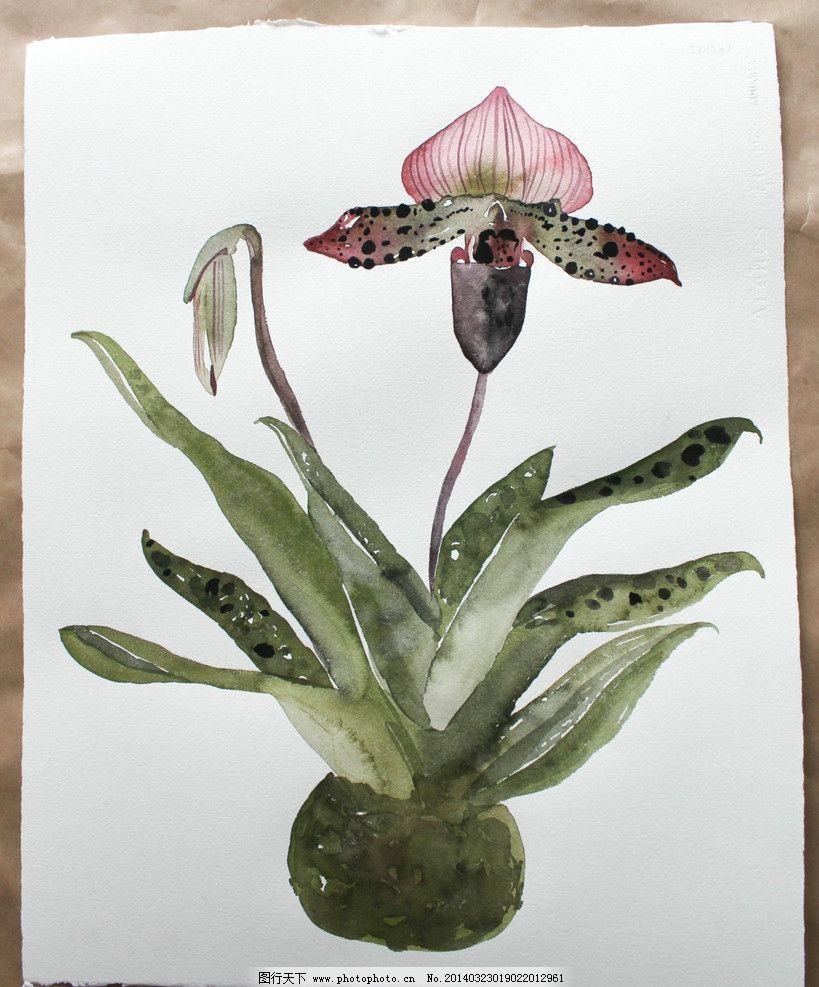 手绘水彩画 手绘 水彩画 国外水彩画 软笔画 绿色植物 无框画 兰花
