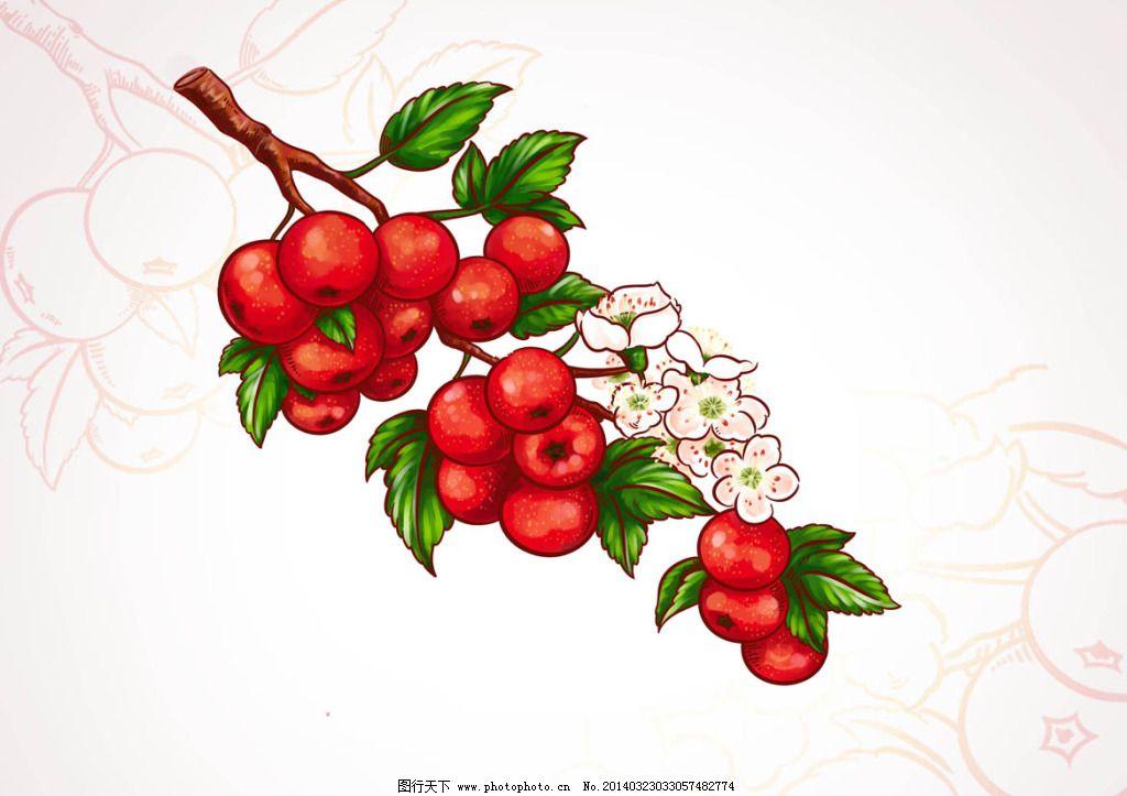 手绘山楂果免费下载 花 手绘 水果 叶子 手绘 山楂果 花 叶子 水果