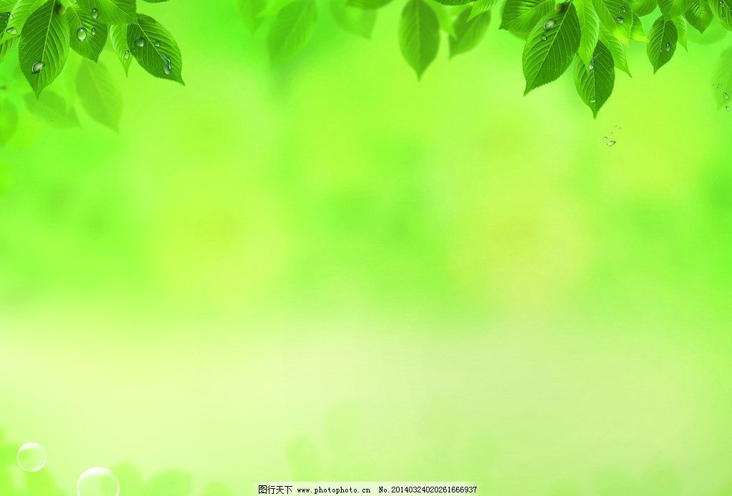背景 壁纸 绿色 绿叶 树叶 植物 桌面 1024_694