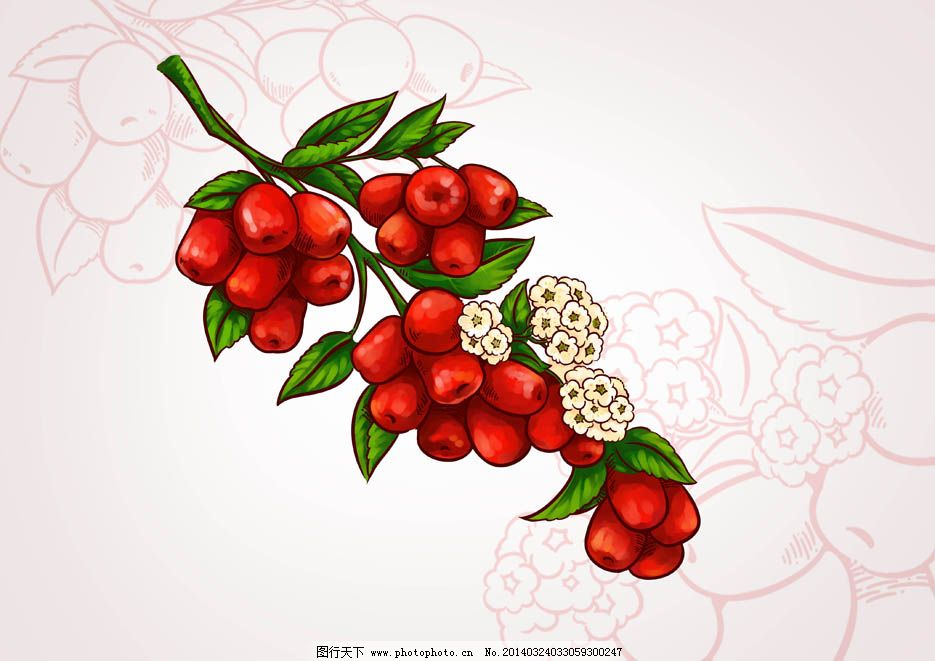 手绘大红枣