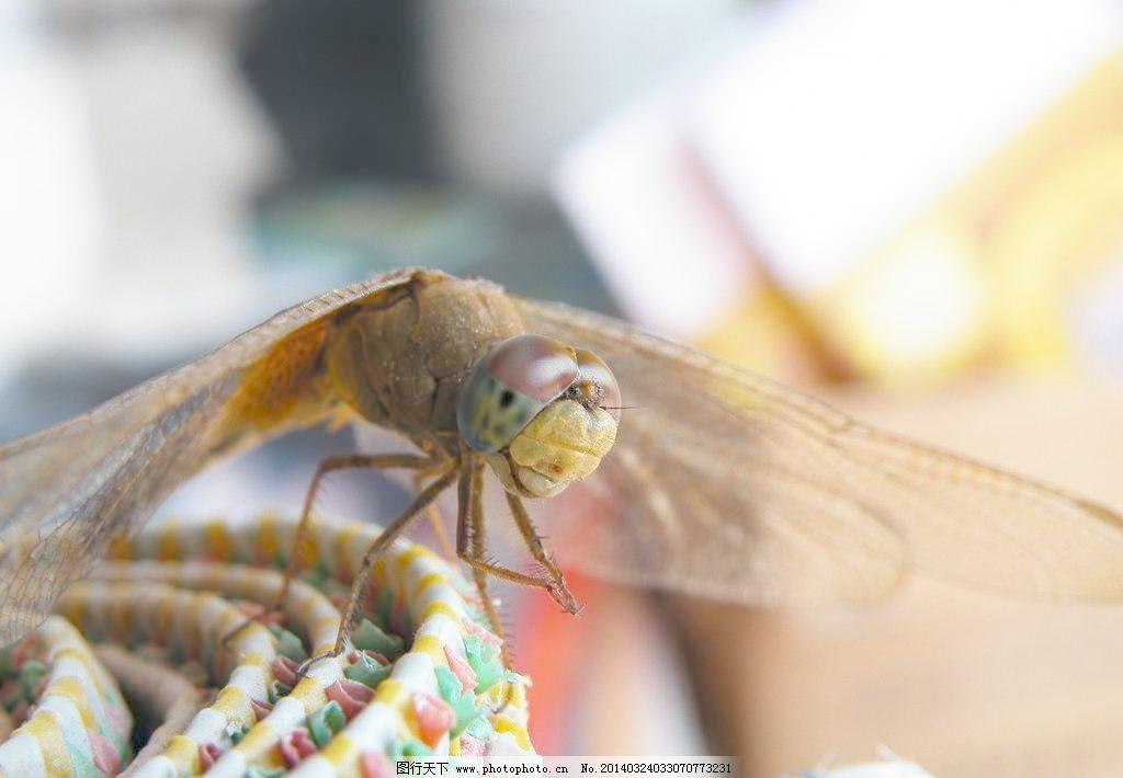 动物 飞行 昆虫 篮子 蜻蜓 摄影 生物 蜻蜓图片素材下载 蜻蜓 动物 飞