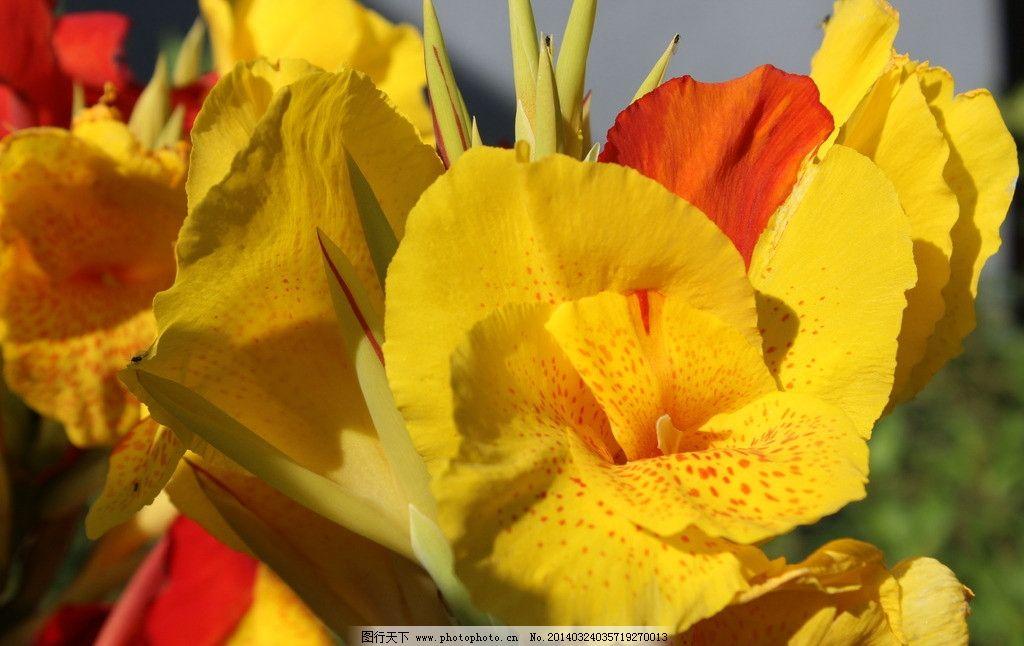 植物花图片
