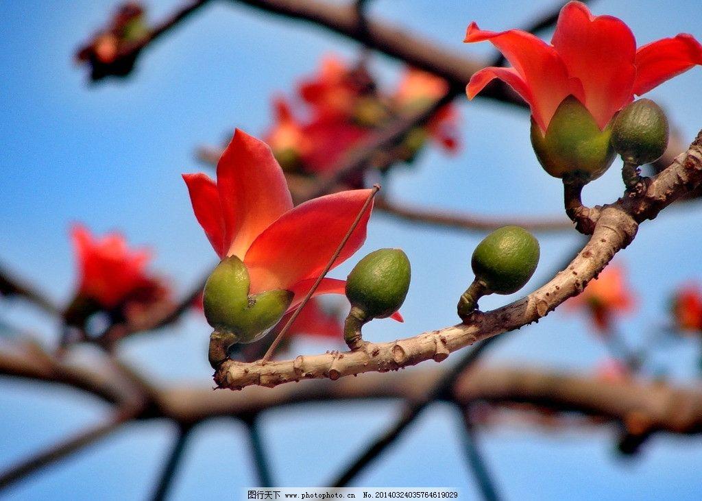 木棉花 植物 风景 树 红色