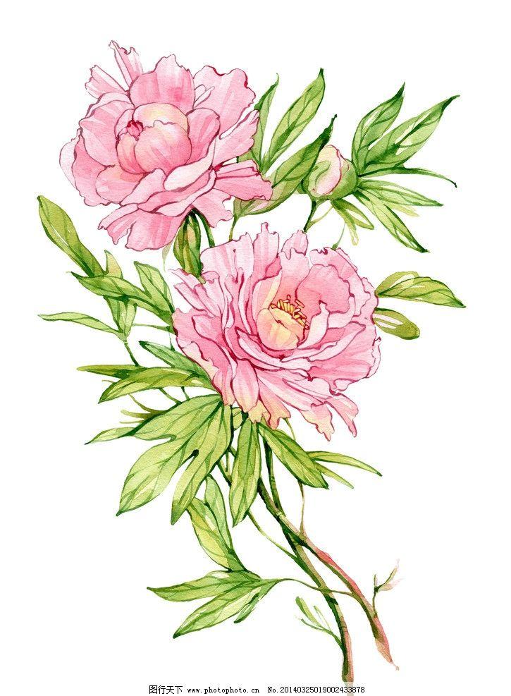 水墨花卉 花朵 鲜花 水墨叶子 手绘 玫瑰花 叶子 泼墨 墨迹 墨痕 水彩