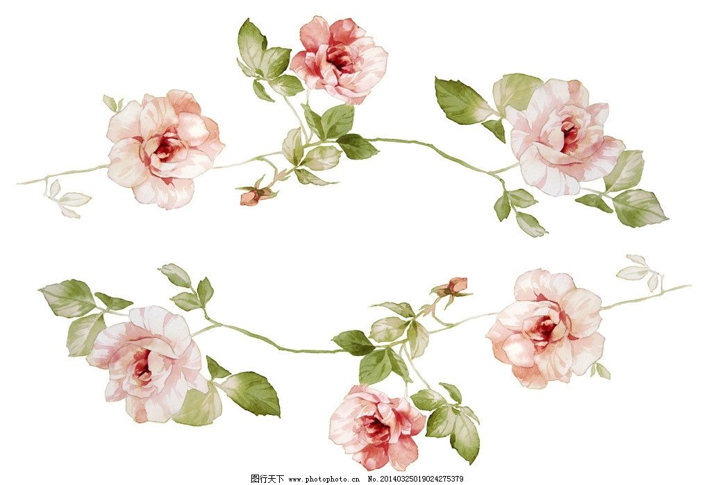 水墨玫瑰花 水墨花卉 花朵