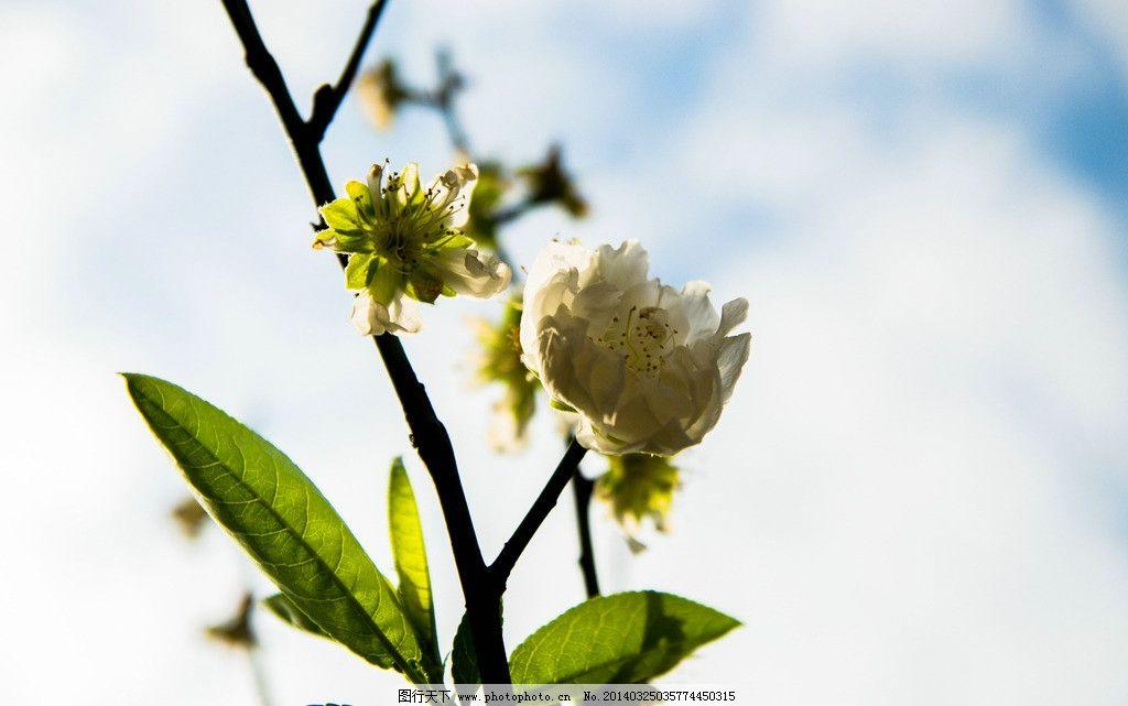 一颗小桃树ppt背景