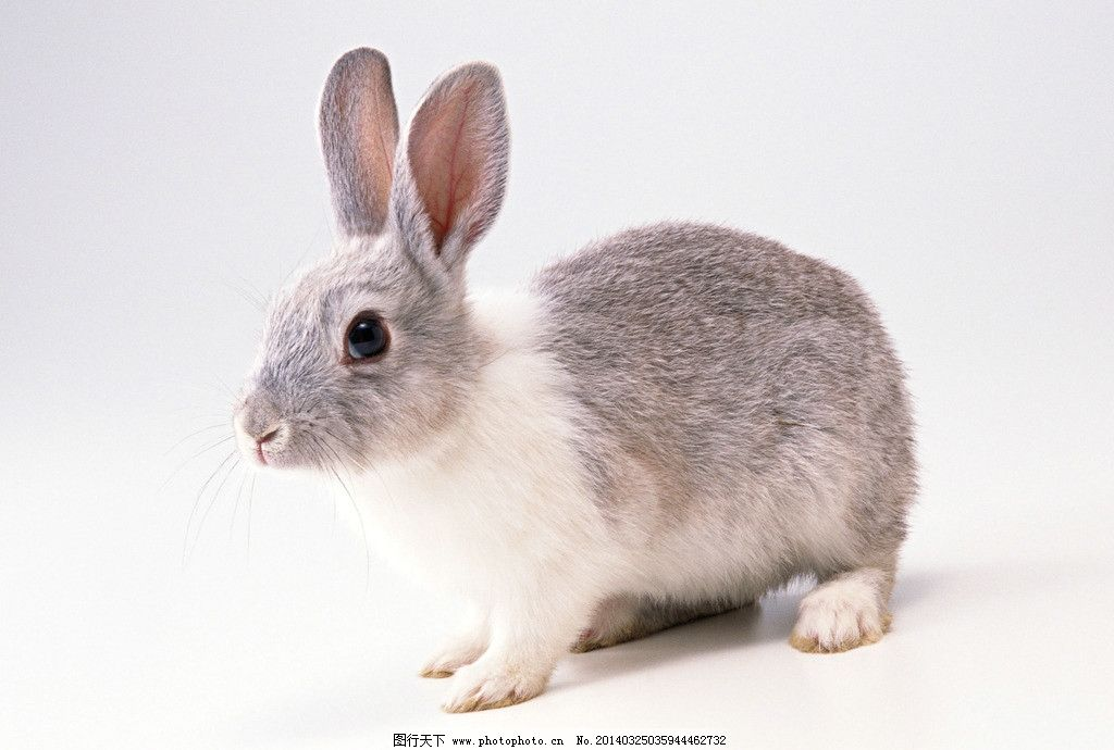 壁纸 动物 兔子 1024_690