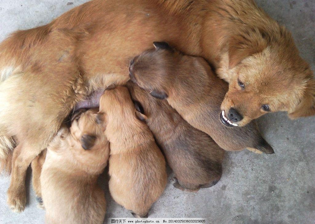 母狗与小狗图片