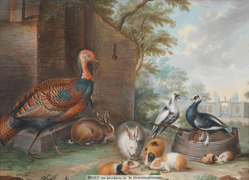 动物油画 家禽 鸽子 兔子