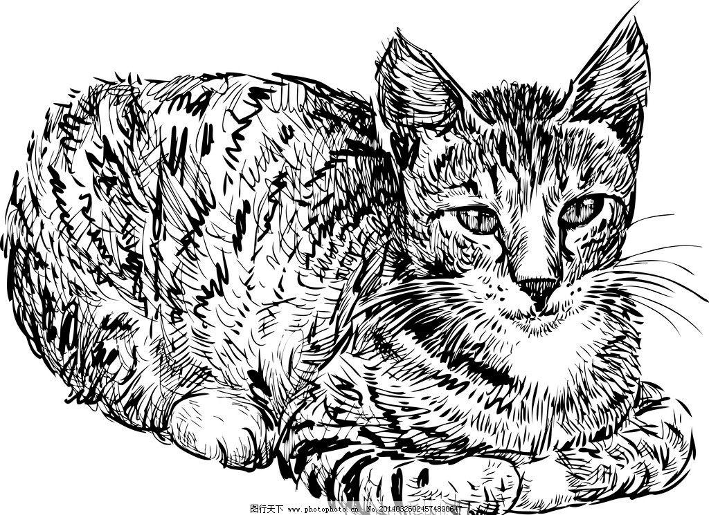 手绘猫图片