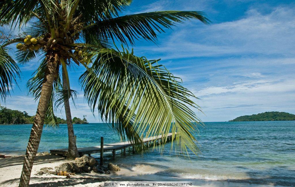 椰子树 海边图片