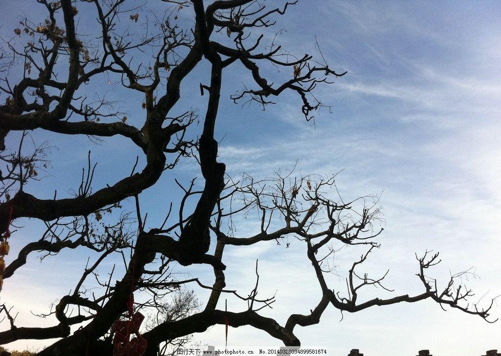 古树 树 天空 剪影 紫藤 自然风景 自然景观 摄影 72dpi jpg