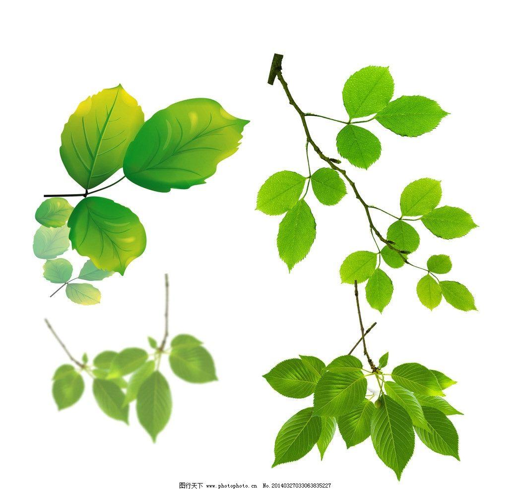花卉植物 花草 手绘 时尚 梦幻 梦幻树叶 各种叶子 绿色树叶素材 psd