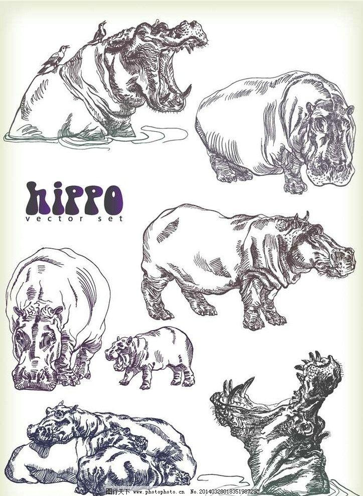河马卡通动物设计动画图片