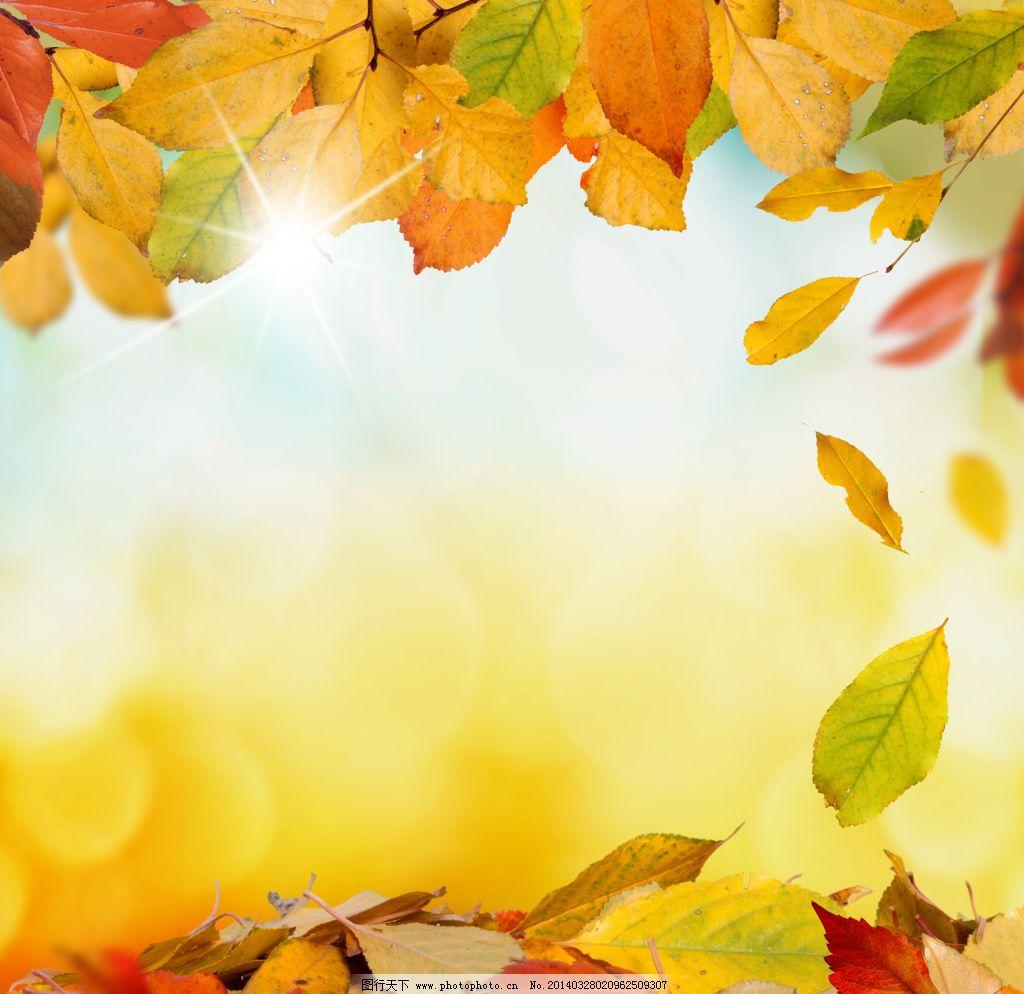 秋天落叶唯美图片图片