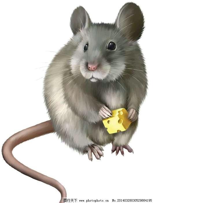 老鼠卡通动物设计动画图片