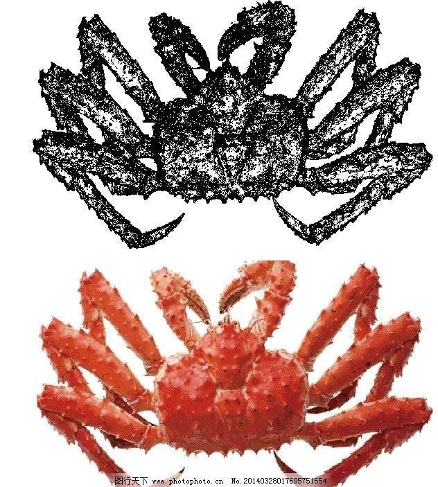 帝皇蟹矢量上色图片